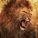 New Lion Image