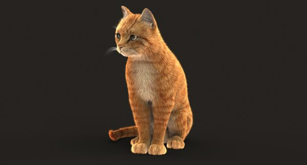Cat (Orange Tabby) (FUR) (ANIMATED)