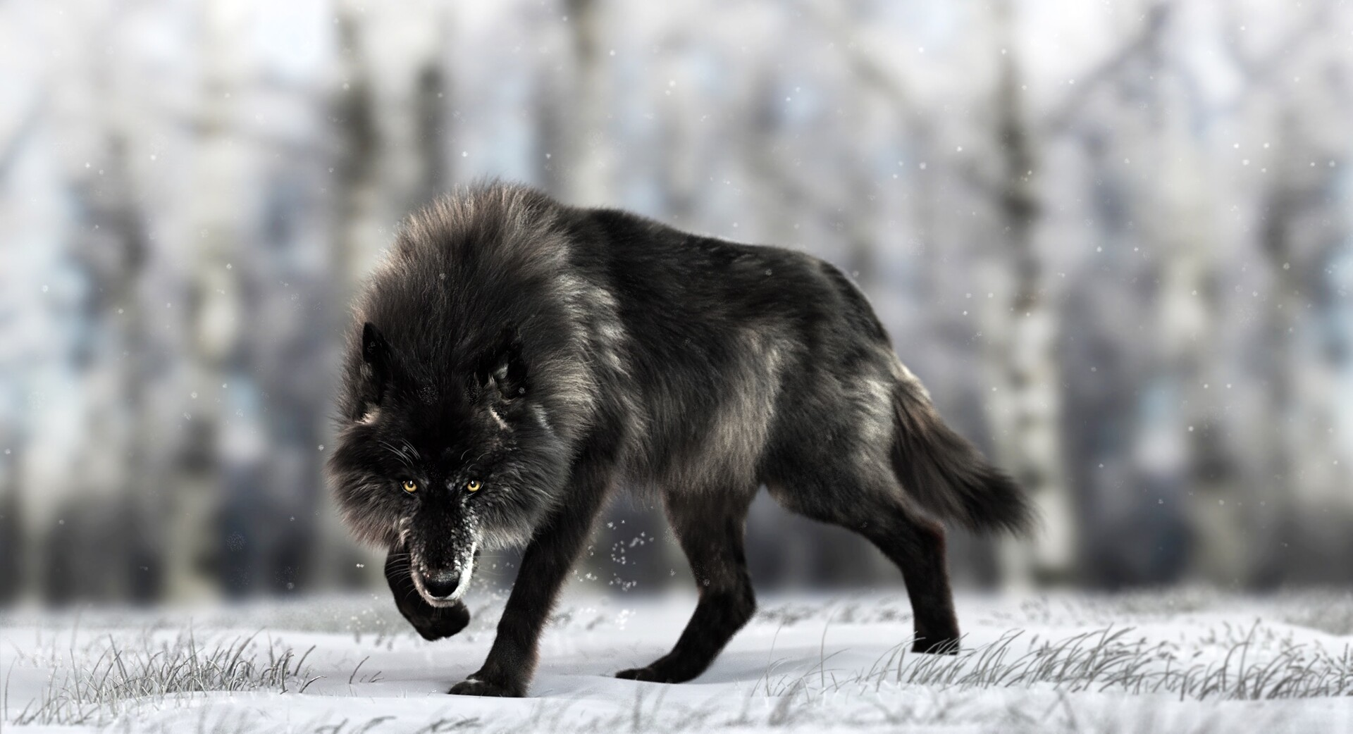 Black Timber Wolf Massimo Righi
