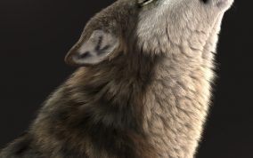 Massimo Righi - Here is the making of my image 'howling' just released by autodesk