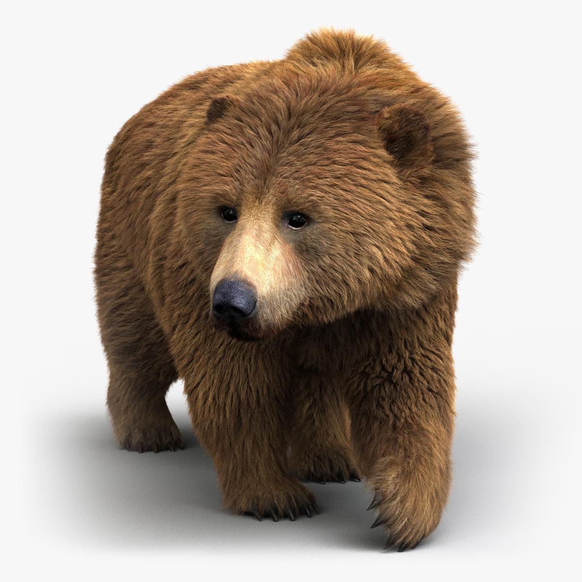 Brown Bear (FUR) (ANIMATED)