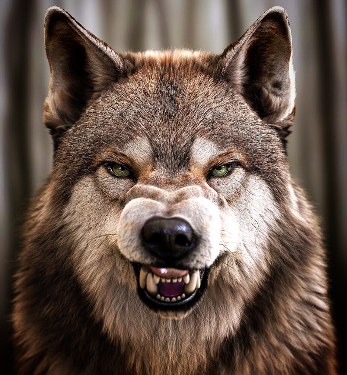 wolf snarl (front view) - Massimo Righi