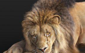 Massimo Righi - Lions xgen